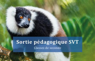 Comprendre les enjeux de la biodiversité : Plongée au cœur du Lemur's Park