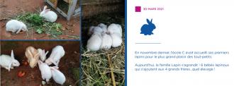 La famille lapin s'aggrandit